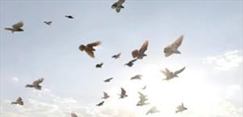 أمطار من الطيور تتساقط في روما (فيديو)