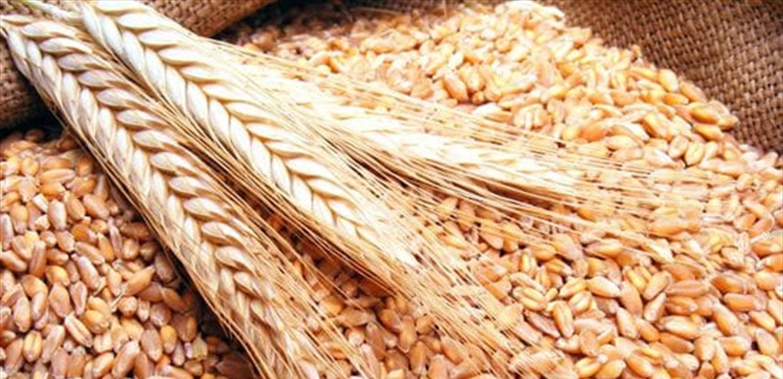 مزارعو الحبوب جنوبا: لعدم شمول القطاع الزراعي بالإقفال