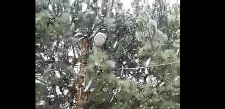 تساقط الثلوج بكثافة على مرتفعات عكار