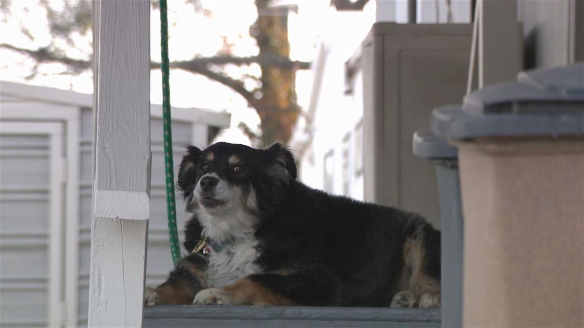 رجل أعمال يورث كلبته 'لولو' 5 ملايين دولار (صورة)