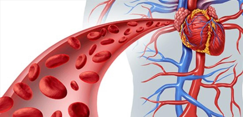 كيف نعزز عدد كريات الدم الحمراء في الجسم؟