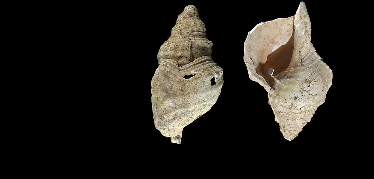 العثور على آلة موسيقية عمرها أكثر من 18 ألف عام!