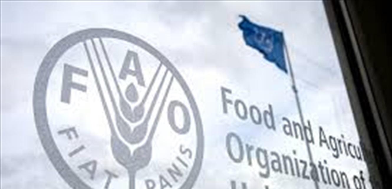 للشهر العاشر على التوالي.. مؤشر أسعار الغذاء العالمية إلى ارتفاع