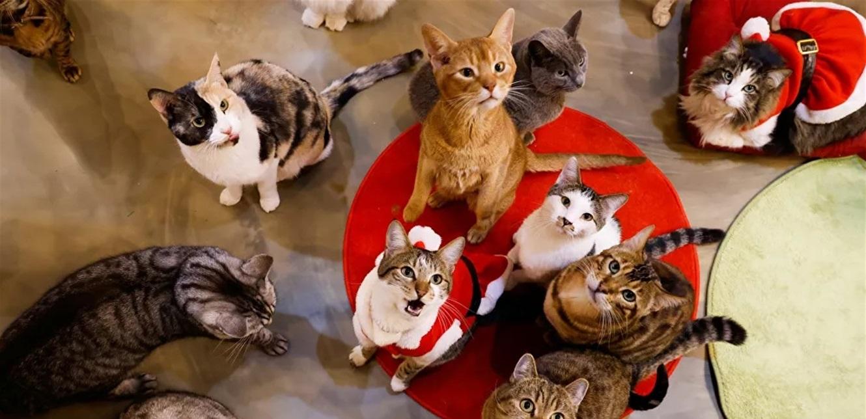 الصحة العالمية تؤكد إمكانية نقل البشر لفيروس كورونا للقطط والكلاب!