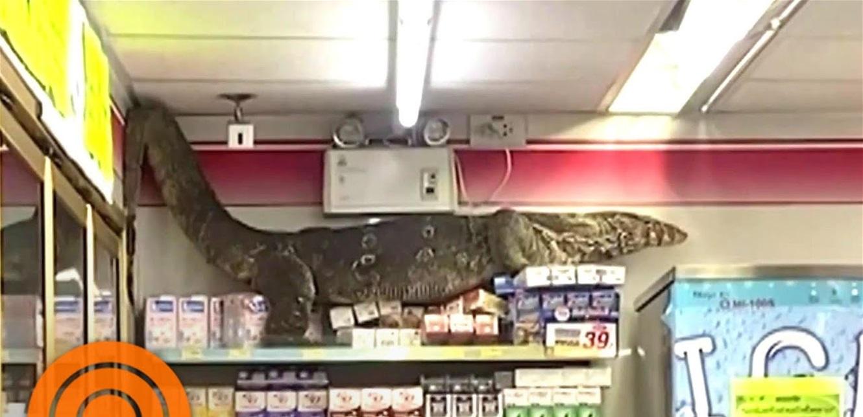 مشهد مرعب: سحلية عملاقة تقتحم متجرا وتسبب الذعر.. شاهدوا الفيديو