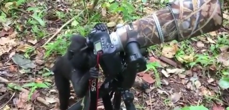 قرد يجرب العمل كمصور فوتوغرافي محترف! (فيديو)
